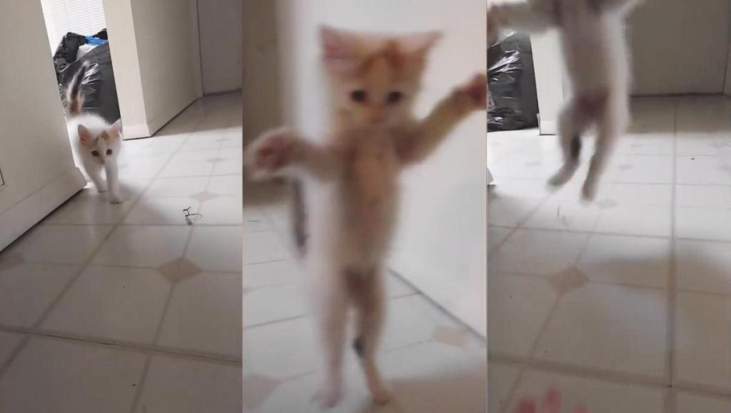 """胆小的猫咪,受到惊吓时真的会""""吓一跳"""""""