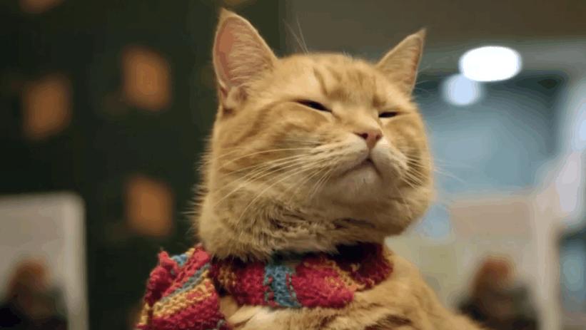 网红招财猫,它不仅带给主人金钱,还有勇气!